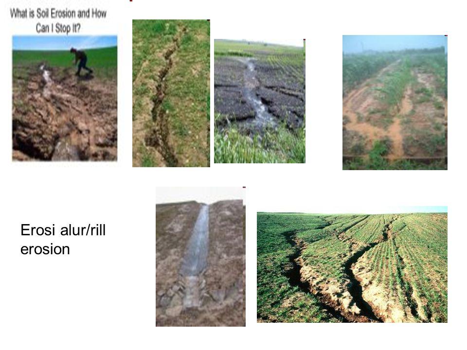 Erosi alur/rill erosion