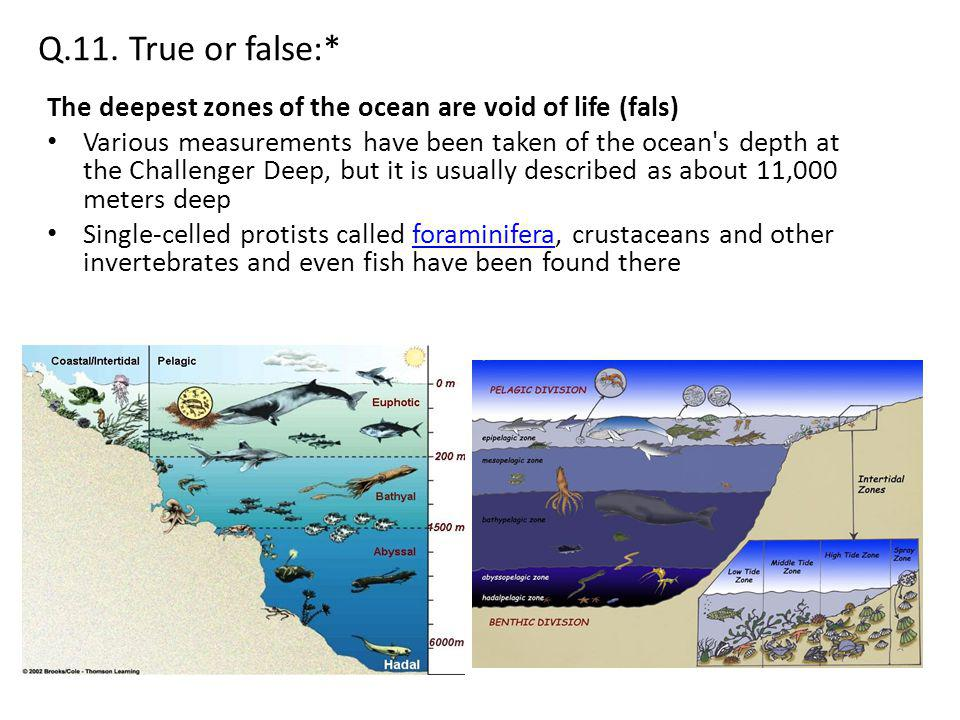 Q.11. True or false:* The deepest zones of the ocean are void of life (fals)