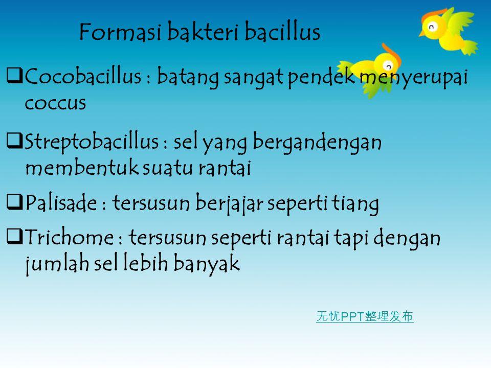 Formasi bakteri bacillus