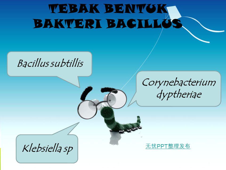 TEBAK BENTUK BAKTERI BACILLUS Corynebacterium dyptheriae