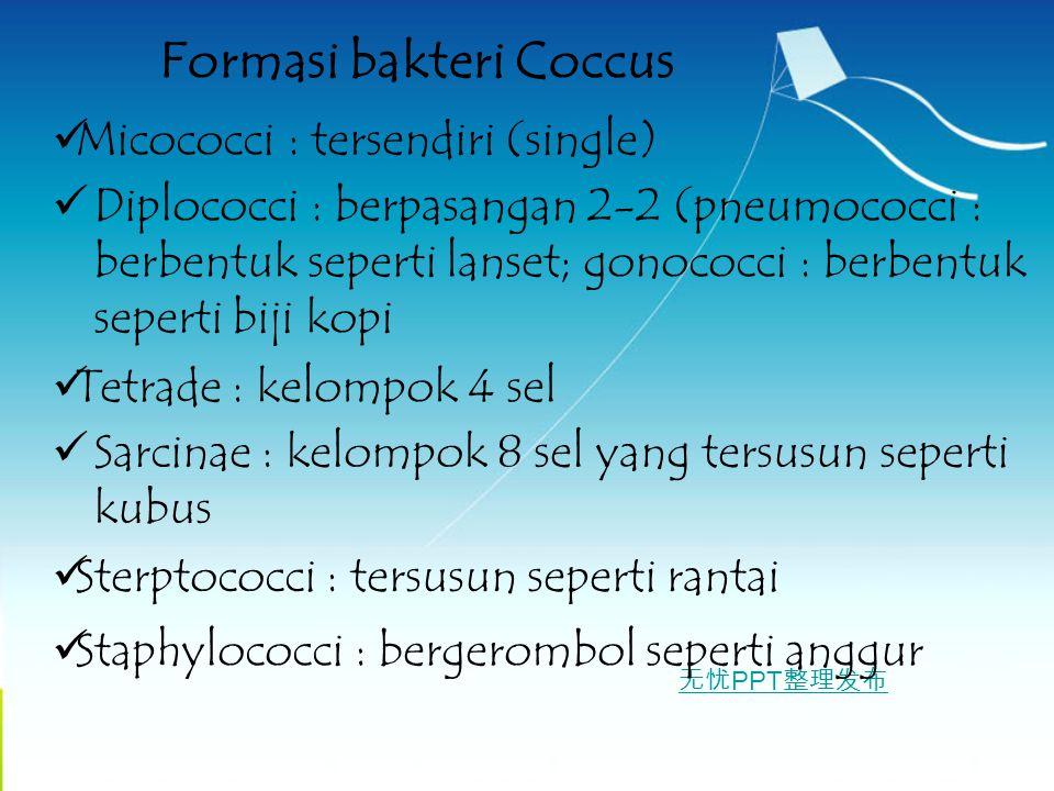 Formasi bakteri Coccus