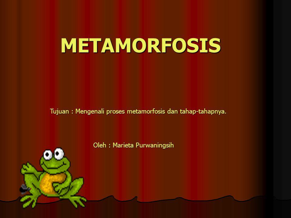 METAMORFOSIS Tujuan : Mengenali proses metamorfosis dan tahap-tahapnya. Oleh : Marieta Purwaningsih