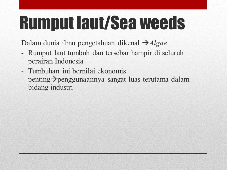 Rumput laut/Sea weeds