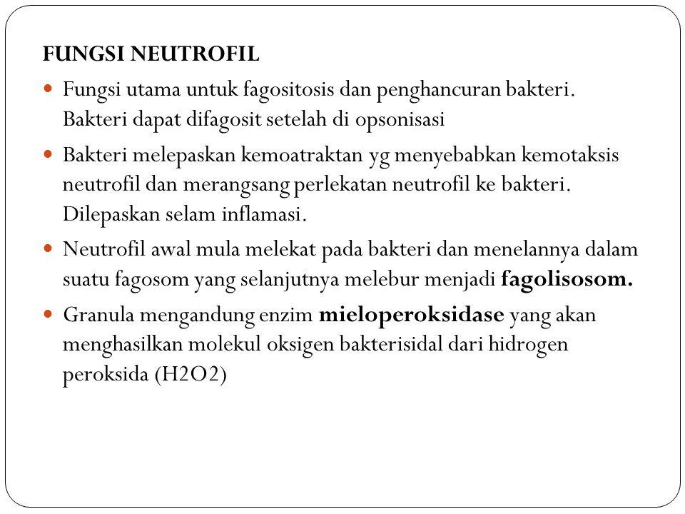 FUNGSI NEUTROFIL Fungsi utama untuk fagositosis dan penghancuran bakteri. Bakteri dapat difagosit setelah di opsonisasi.