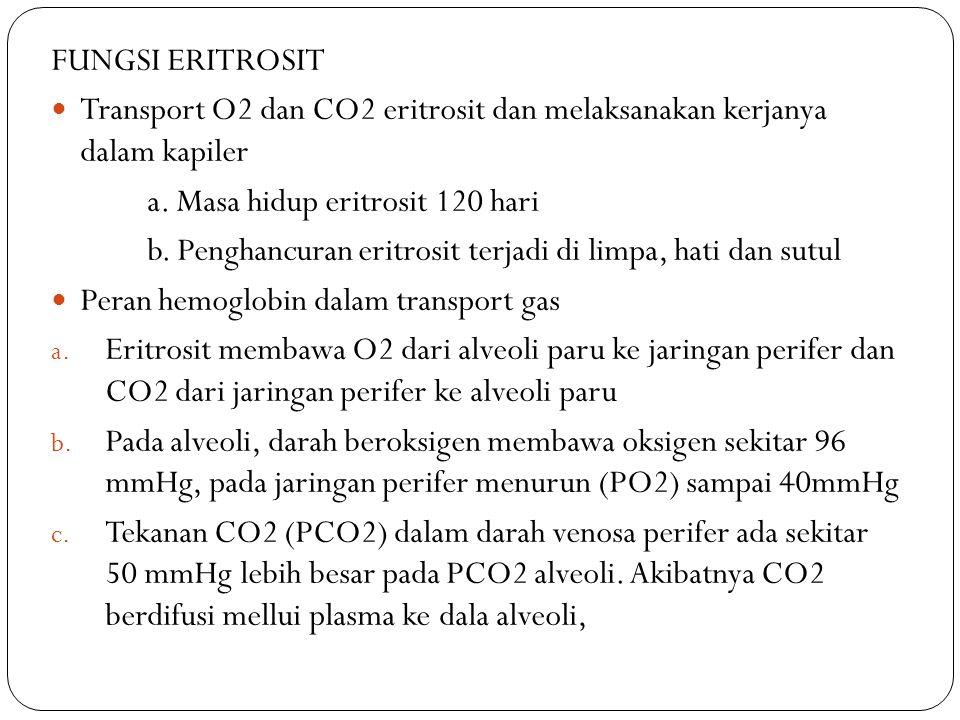 FUNGSI ERITROSIT Transport O2 dan CO2 eritrosit dan melaksanakan kerjanya dalam kapiler. a. Masa hidup eritrosit 120 hari.