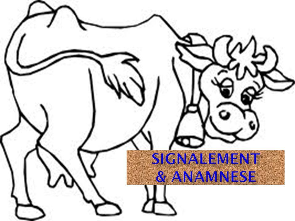 SIGNALEMENT & ANAMNESE