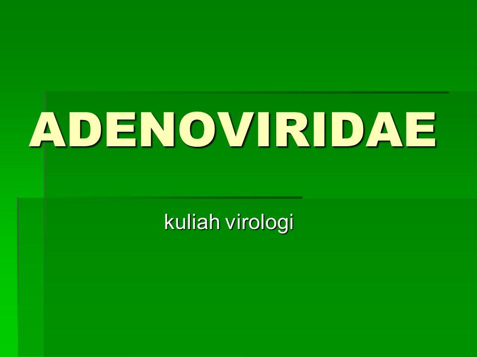 ADENOVIRIDAE kuliah virologi