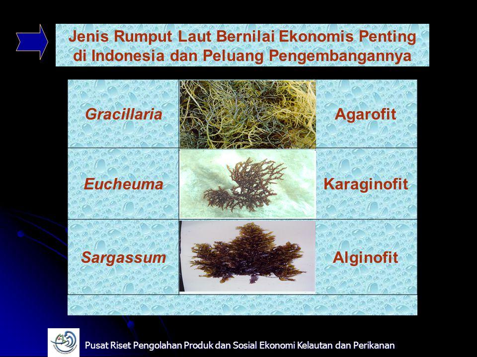 Jenis Rumput Laut Bernilai Ekonomis Penting