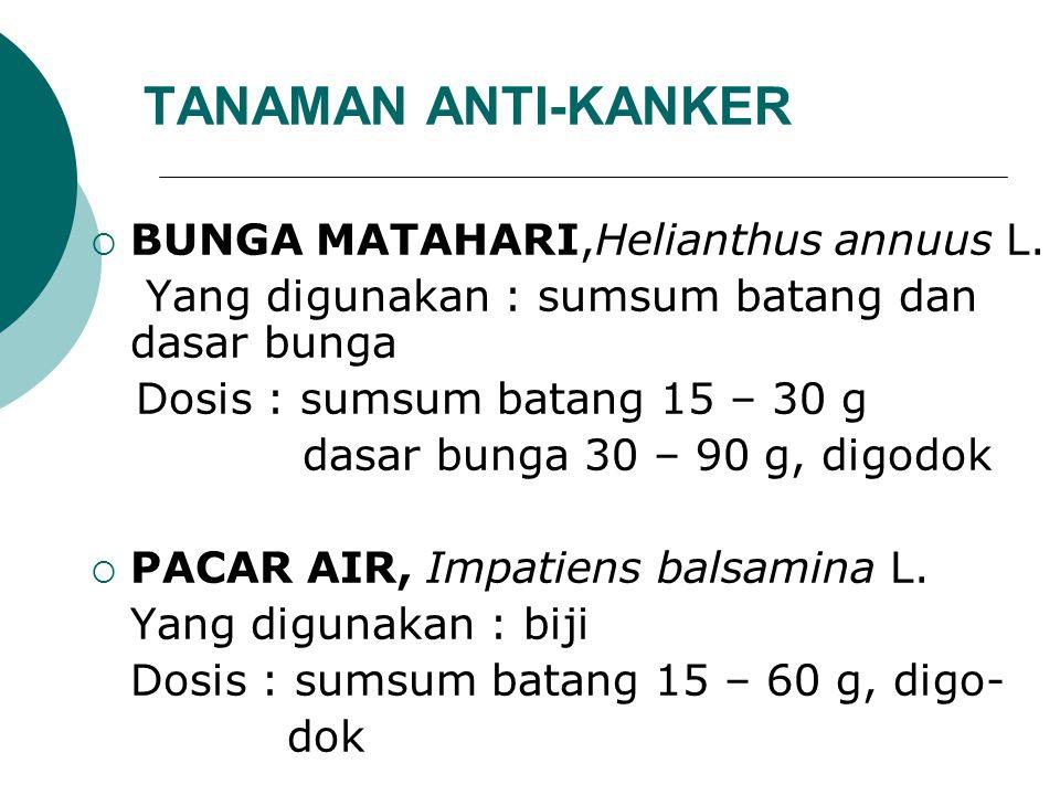TANAMAN ANTI-KANKER BUNGA MATAHARI,Helianthus annuus L.