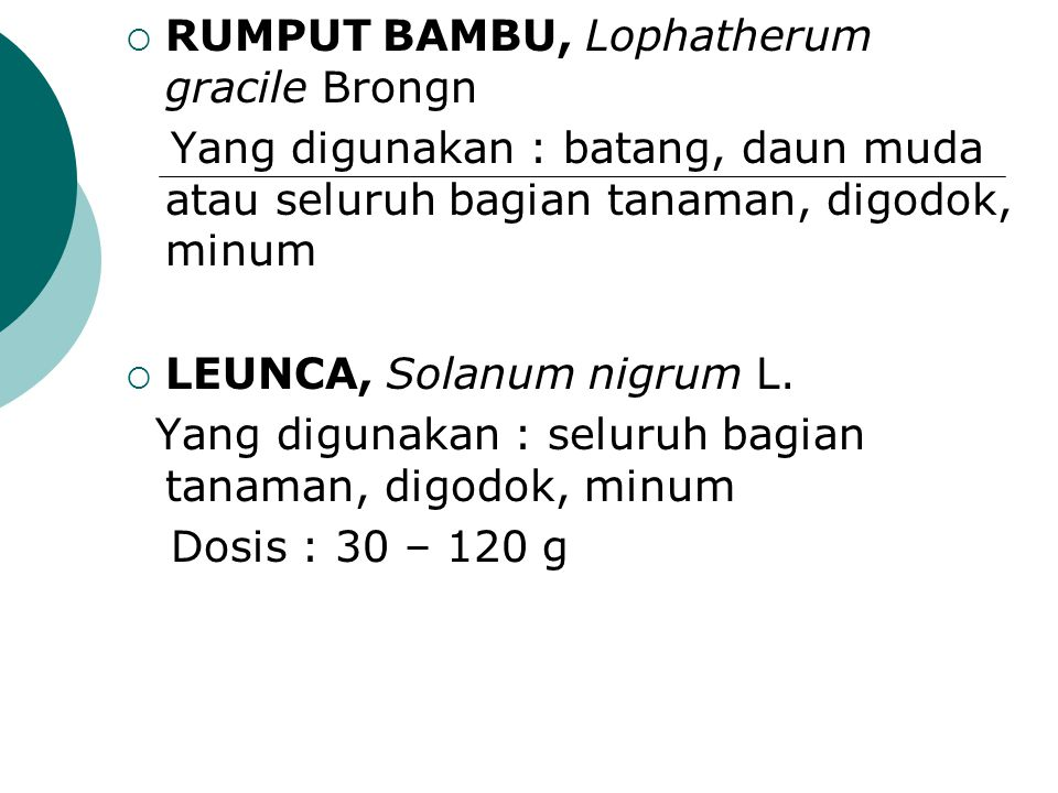 RUMPUT BAMBU, Lophatherum gracile Brongn