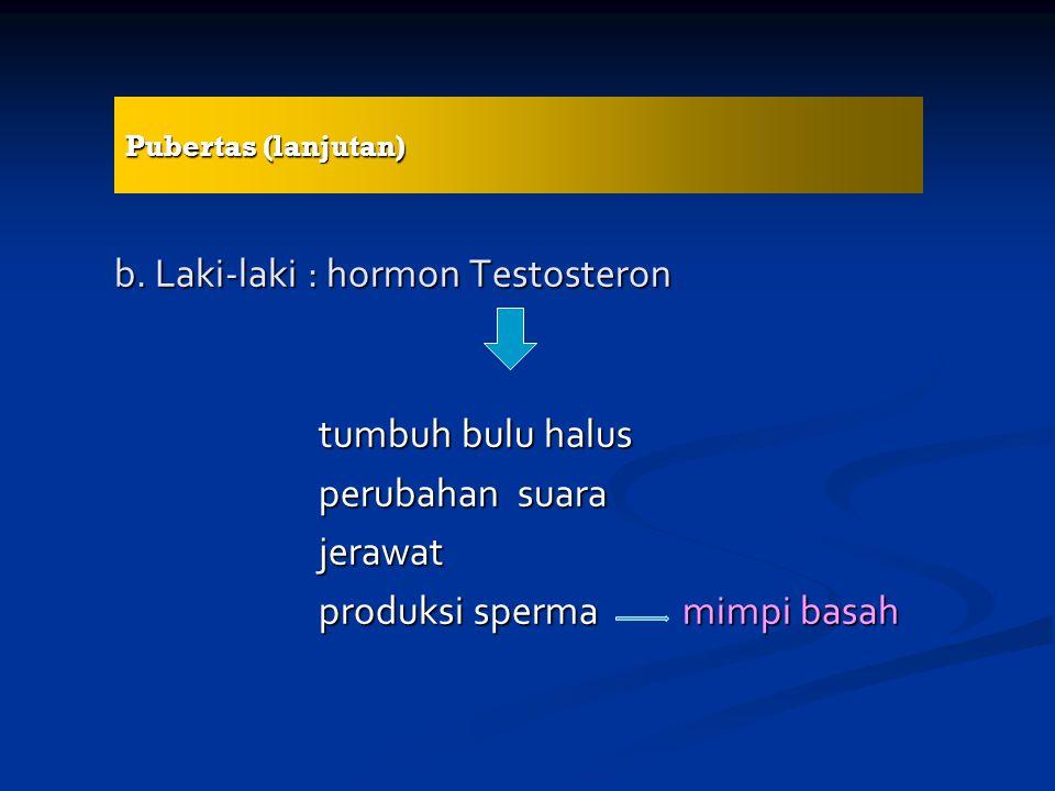 b. Laki-laki : hormon Testosteron