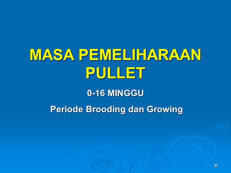 MASA PEMELIHARAAN PULLET Periode Brooding dan Growing