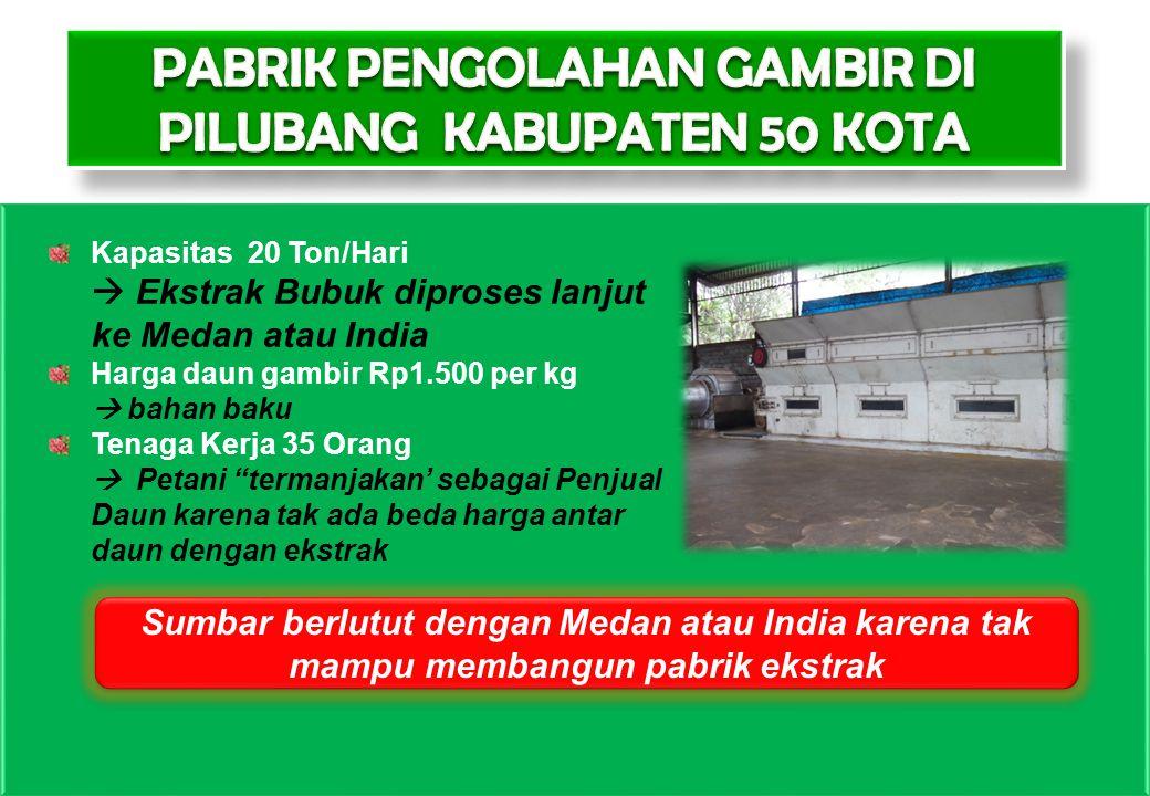 PABRIK PENGOLAHAN GAMBIR DI PILUBANG KABUPATEN 50 KOTA