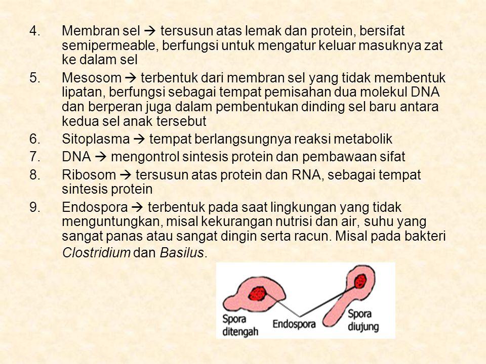 Membran sel  tersusun atas lemak dan protein, bersifat semipermeable, berfungsi untuk mengatur keluar masuknya zat ke dalam sel