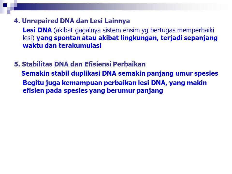 4. Unrepaired DNA dan Lesi Lainnya