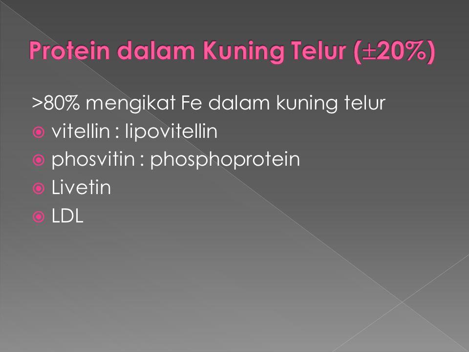 Protein dalam Kuning Telur (20%)