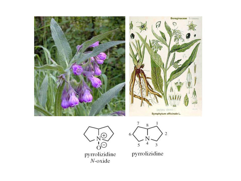 Symphytum officinale Alkaloid Pirolizidin