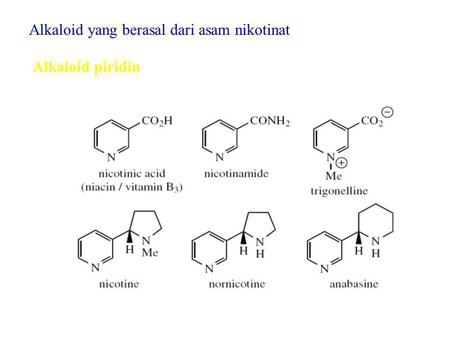 Alkaloid yang berasal dari asam nikotinat