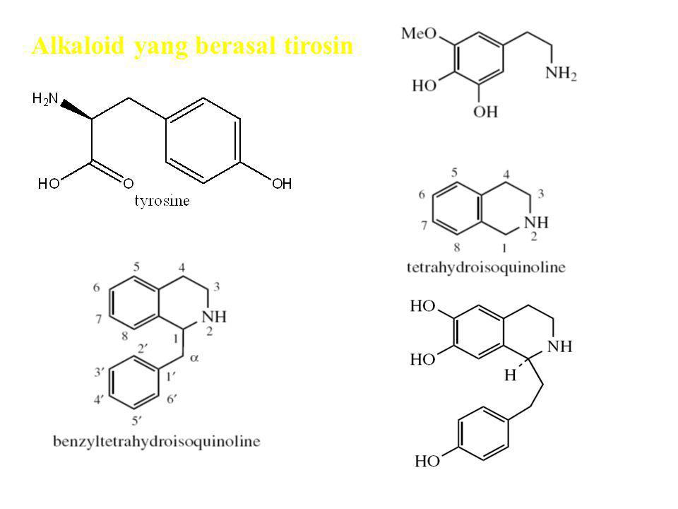 Alkaloid yang berasal tirosin