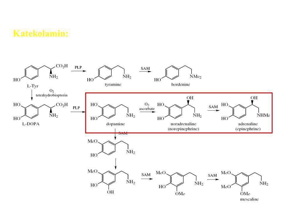 Alkaloid fenil etil amin