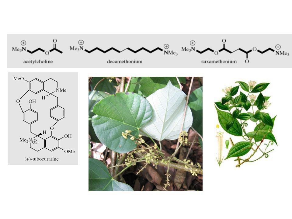 Alkaloid Benziltetrahidroisokuinolin