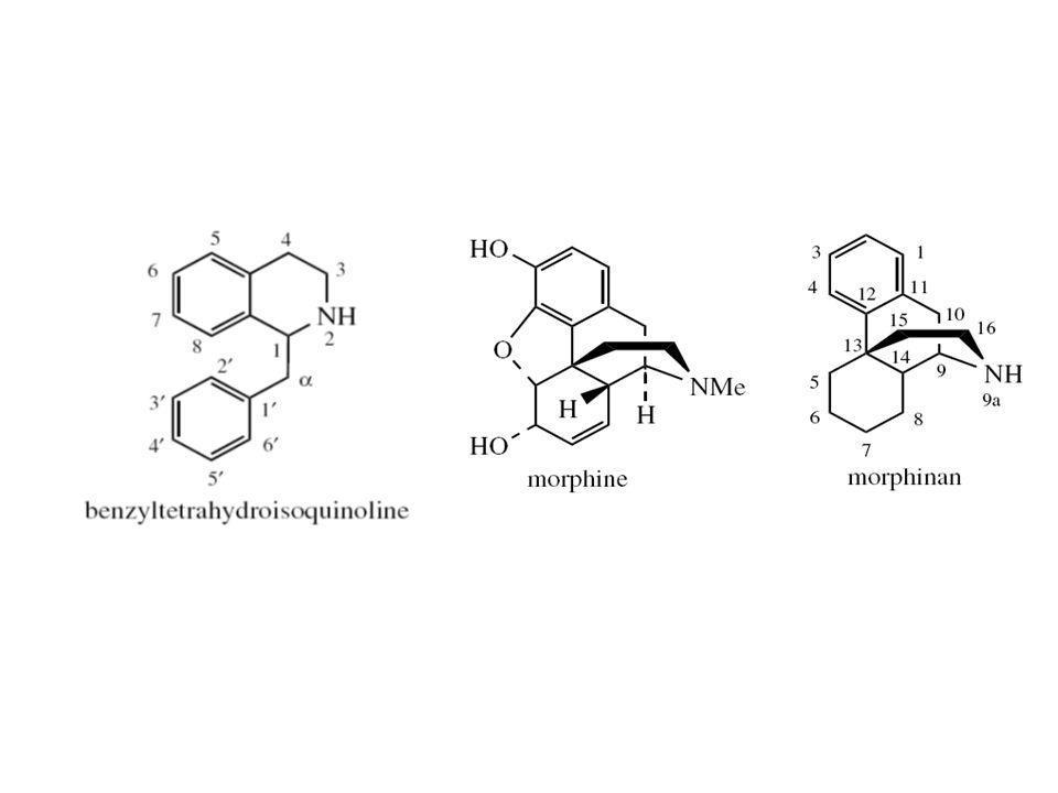 Alkaloid Benziltetrahidroisokuinolin yang termodifikasi
