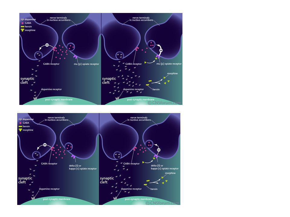 Heroin memodifikasi aksi dopamin di Brain's reward pathway