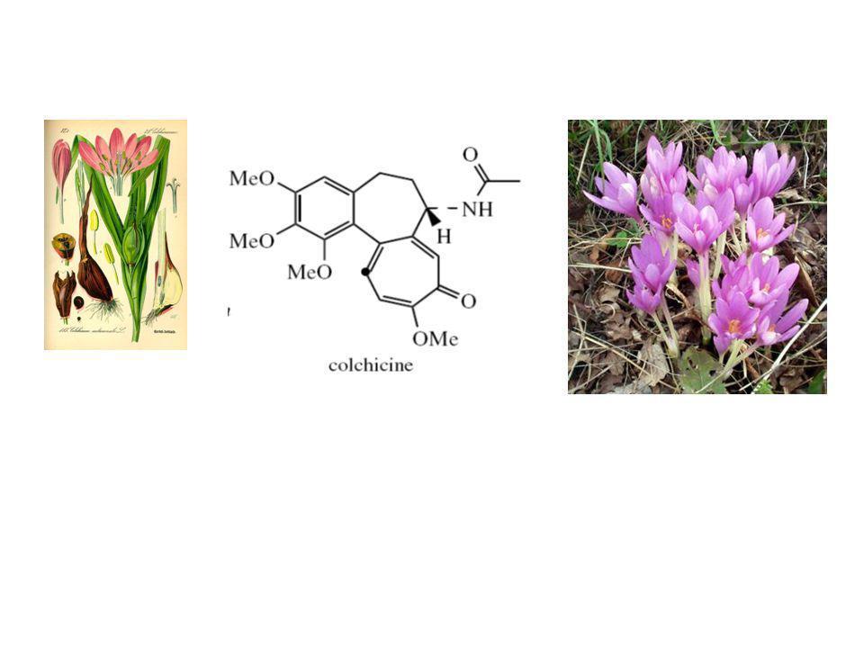 Alkaloid Feniletilisokuinolin