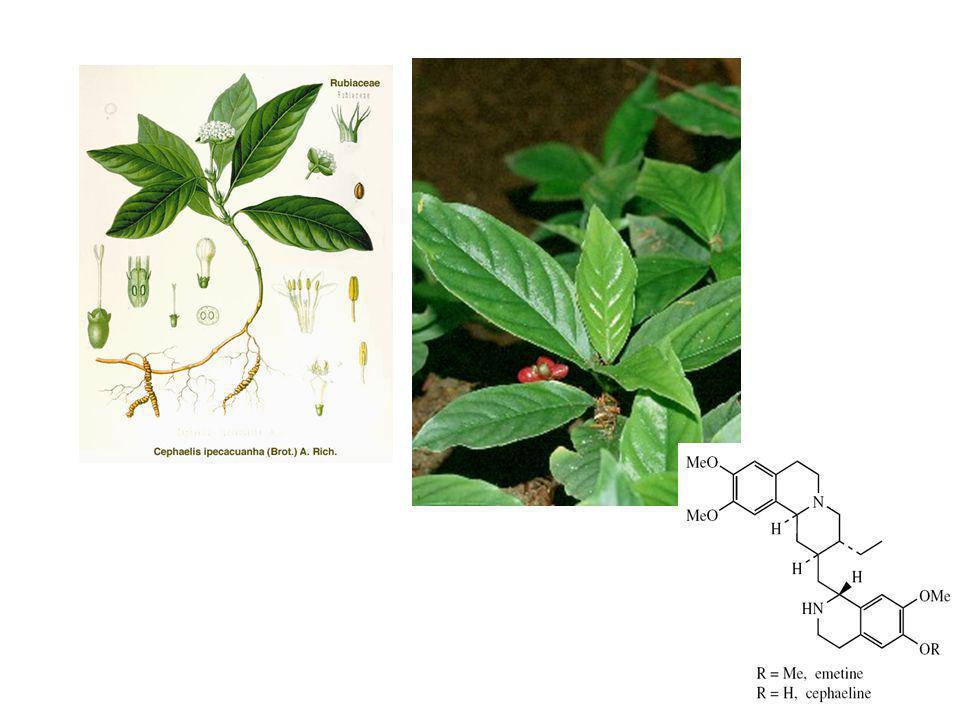 Alkaloid terpenoid tetrahidroisokuinolin
