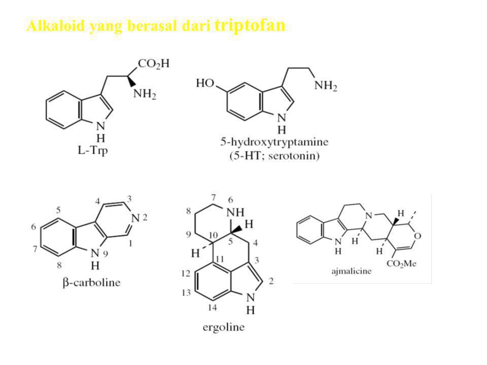 Alkaloid yang berasal dari triptofan