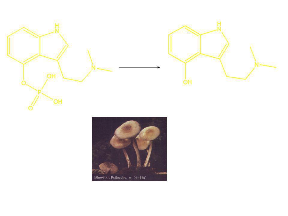 Asam atau fosfatase Psilosin (aktif) Psilosibin (prodrug)