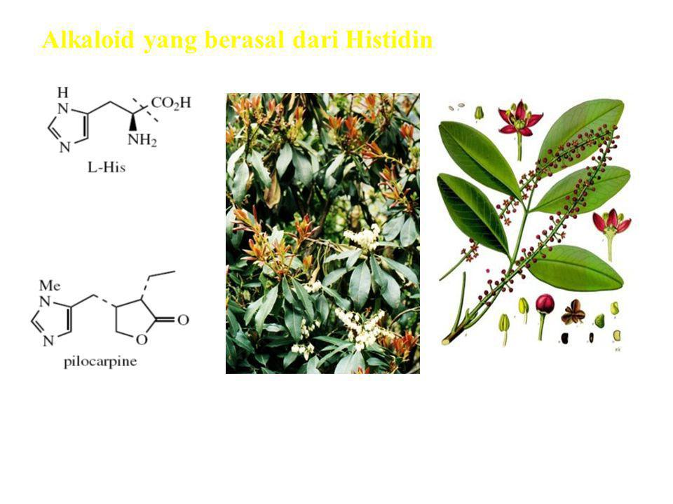 Alkaloid yang berasal dari Histidin