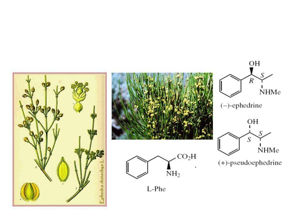 Alkaloid yang berasal dari fenilalanin