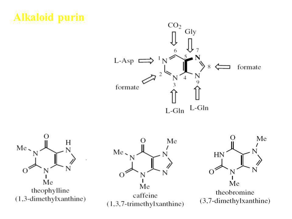 Alkaloid purin