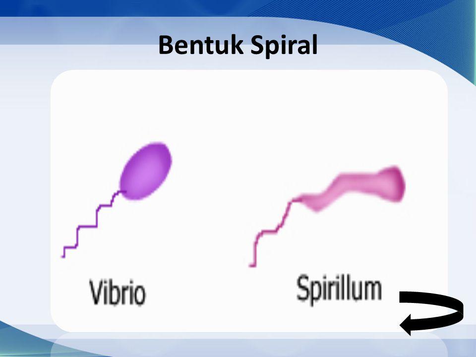 Bentuk Spiral