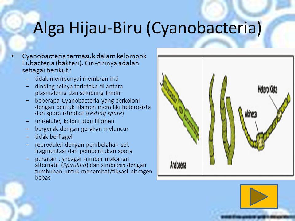 Alga Hijau-Biru (Cyanobacteria)