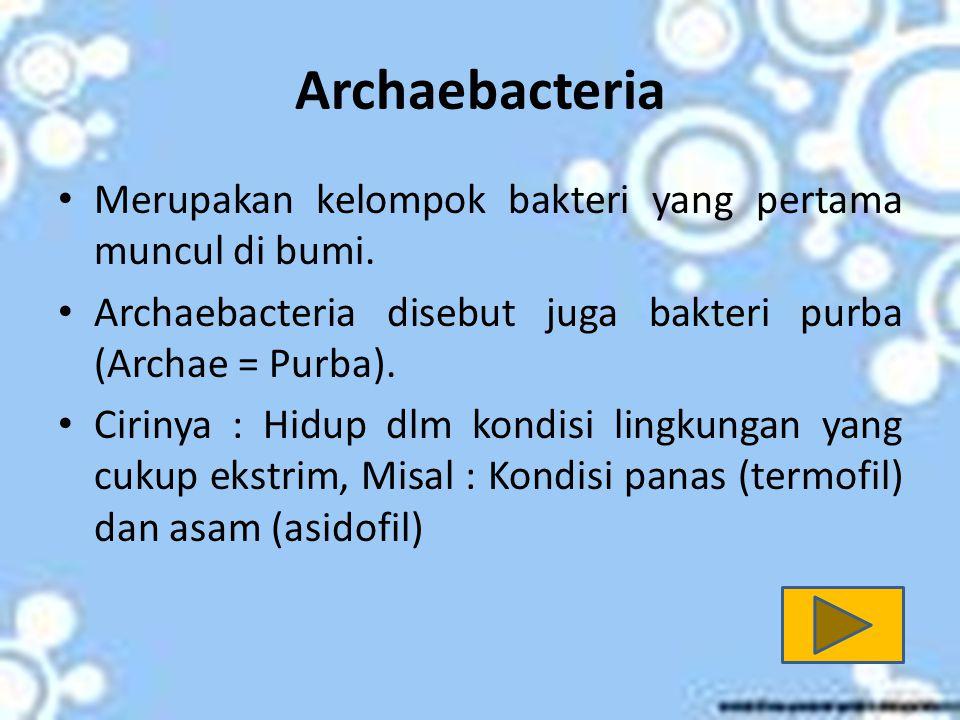 Archaebacteria Merupakan kelompok bakteri yang pertama muncul di bumi.