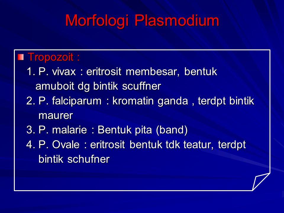 Morfologi Plasmodium Tropozoit :
