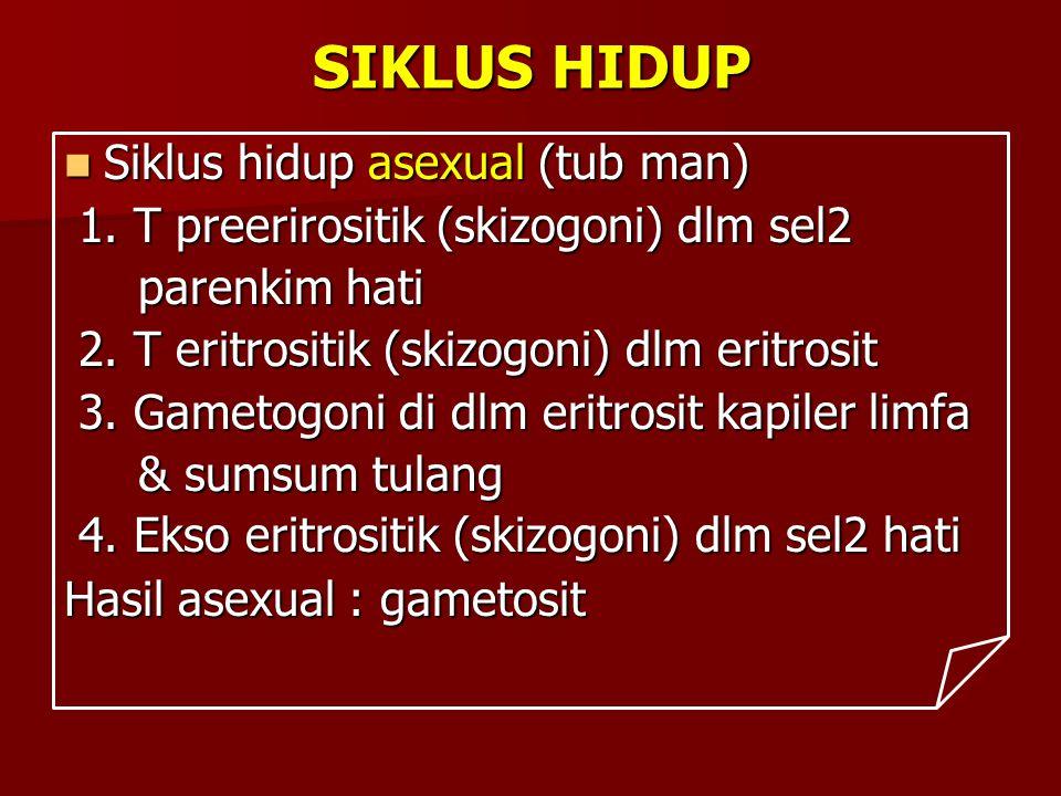 SIKLUS HIDUP Siklus hidup asexual (tub man)