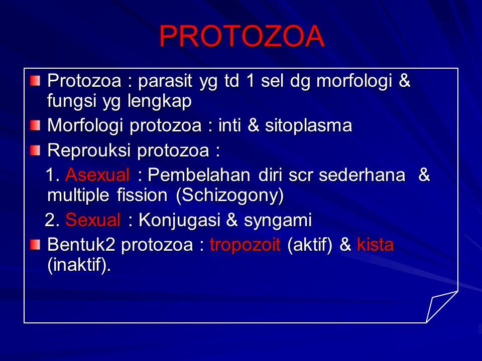 PROTOZOA Protozoa : parasit yg td 1 sel dg morfologi & fungsi yg lengkap. Morfologi protozoa : inti & sitoplasma.