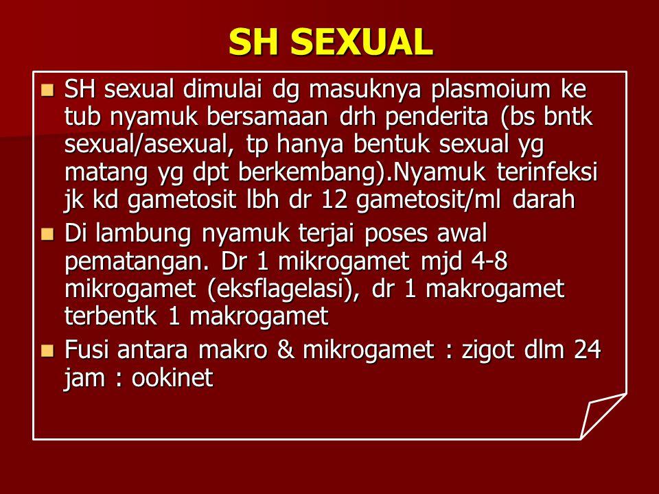 SH SEXUAL