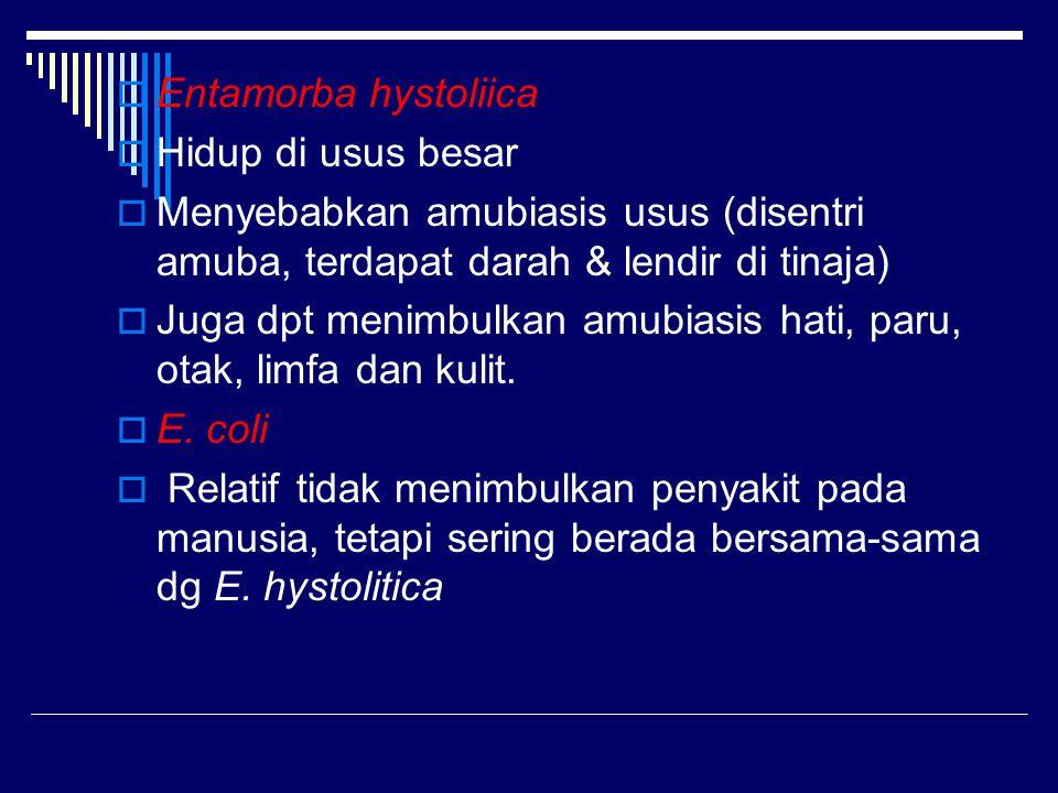 Entamorba hystoliica Hidup di usus besar. Menyebabkan amubiasis usus (disentri amuba, terdapat darah & lendir di tinaja)