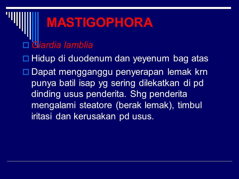 MASTIGOPHORA Giardia lamblia Hidup di duodenum dan yeyenum bag atas