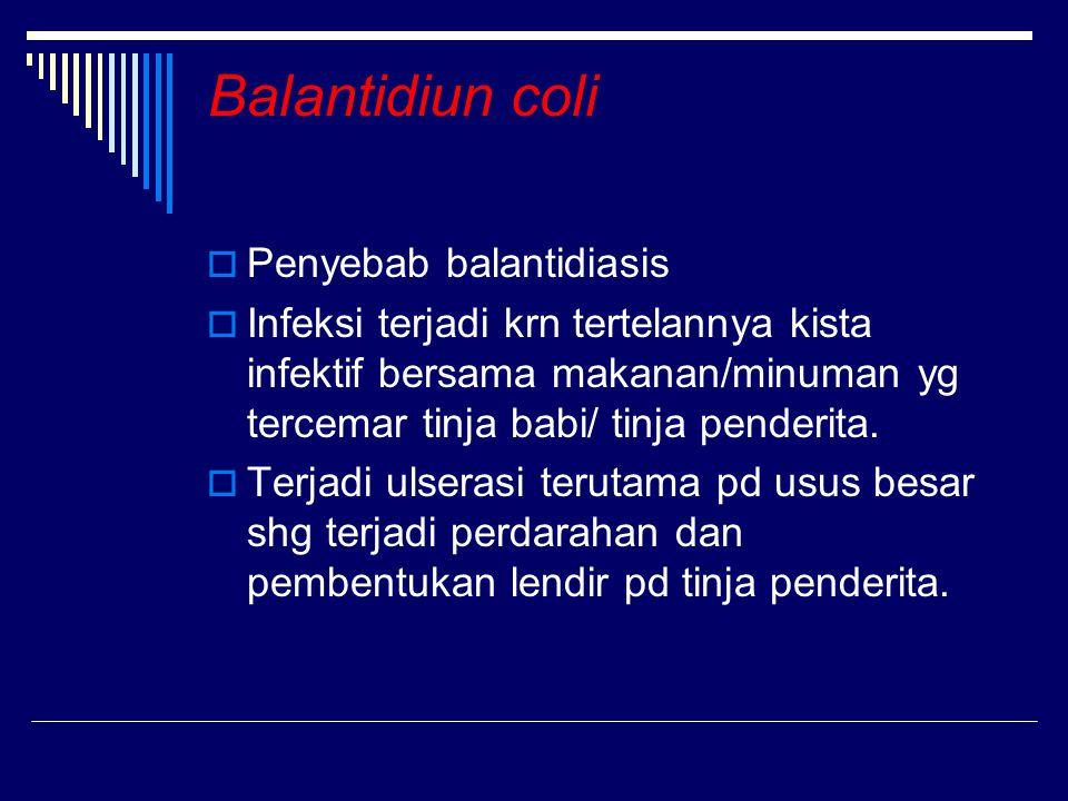 Balantidiun coli Penyebab balantidiasis