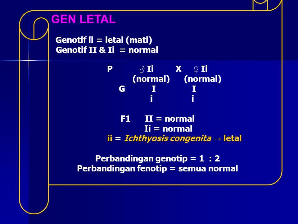GEN LETAL Genotif II & Ii = normal P ♂ Ii X ♀ Ii (normal) (normal)