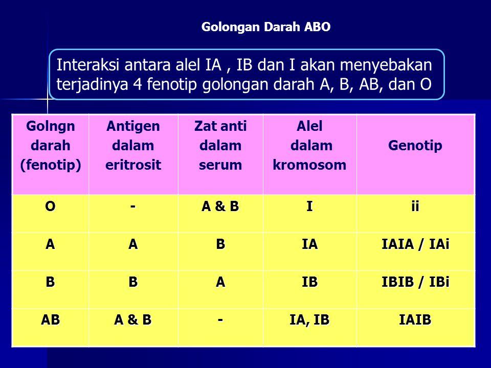 Golongan Darah ABO Interaksi antara alel IA , IB dan I akan menyebakan terjadinya 4 fenotip golongan darah A, B, AB, dan O.