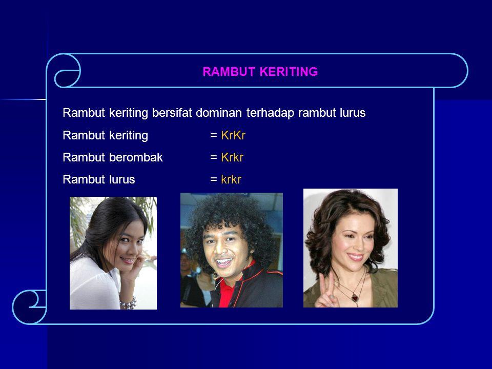 RAMBUT KERITING Rambut keriting bersifat dominan terhadap rambut lurus. Rambut keriting = KrKr. Rambut berombak = Krkr.