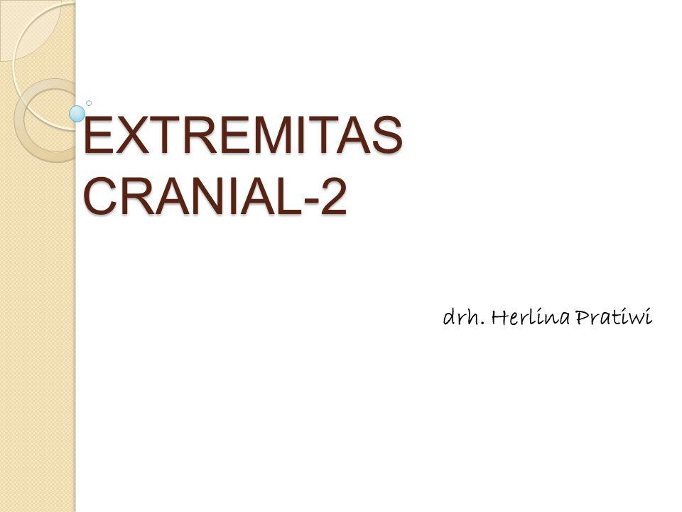 EXTREMITAS CRANIAL-2 drh. Herlina Pratiwi