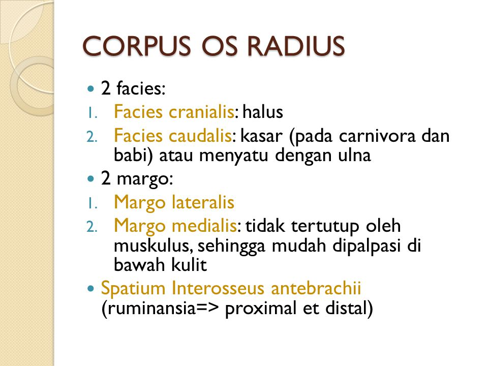 CORPUS OS RADIUS 2 facies: Facies cranialis: halus