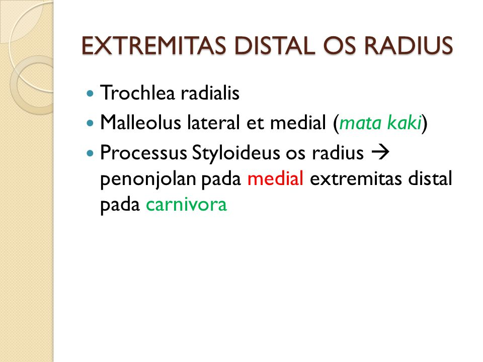 EXTREMITAS DISTAL OS RADIUS